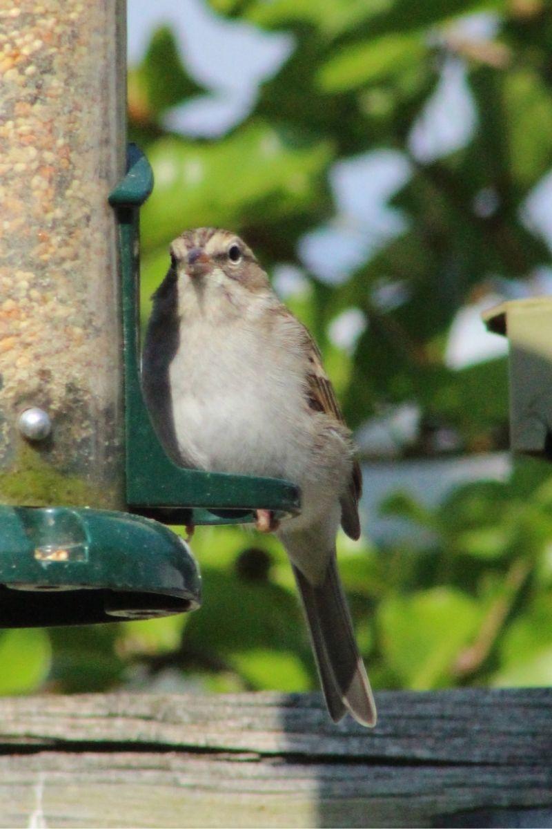 Protéger les oiseaux de nos jardins